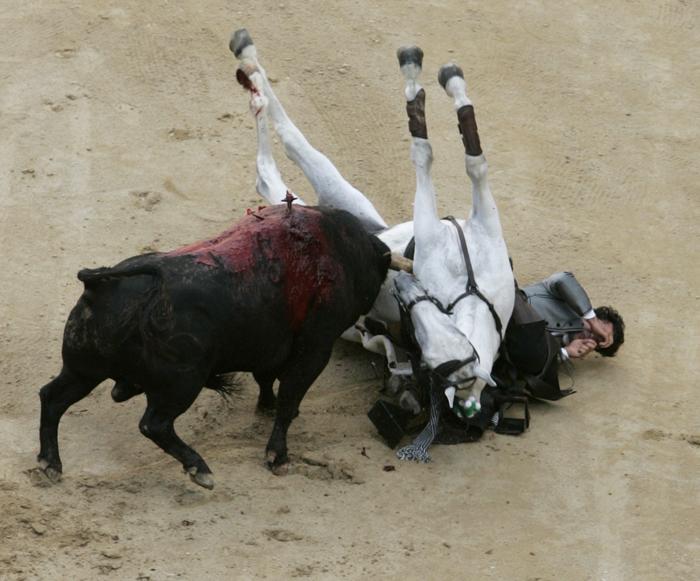Bullfighter Horse Gored