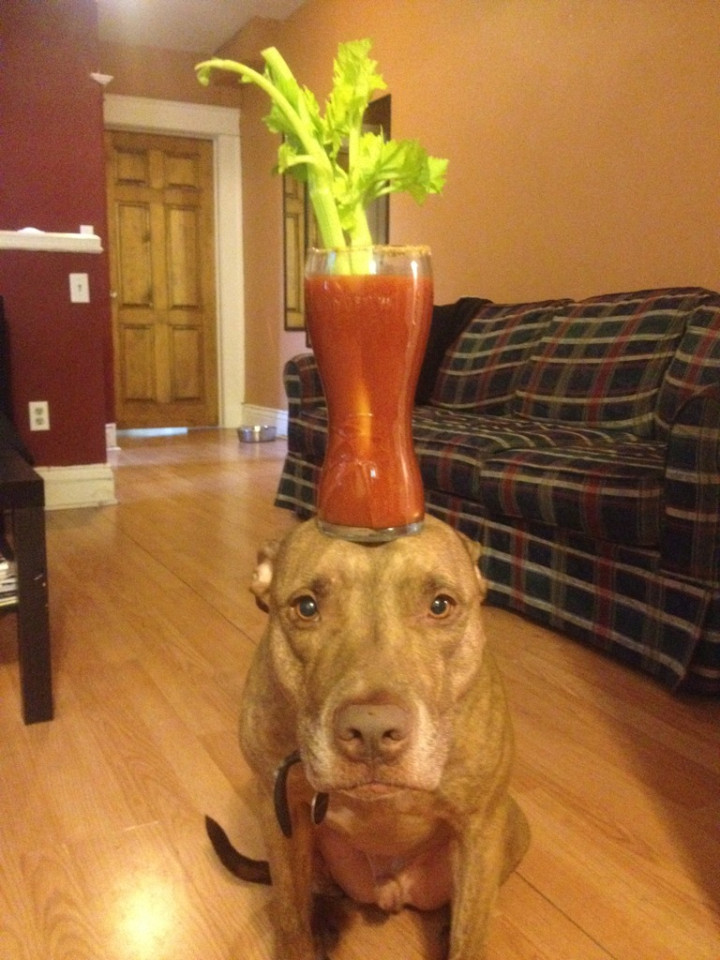 Things On Dogs Heads