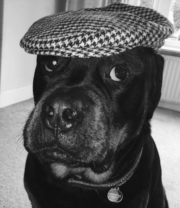 Things On Dogs Heads Hats