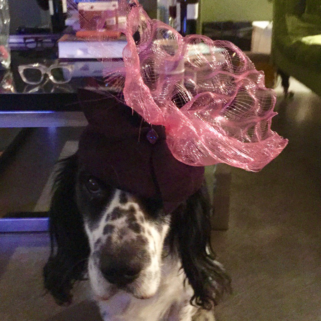 Things On Dogs Heads Oly