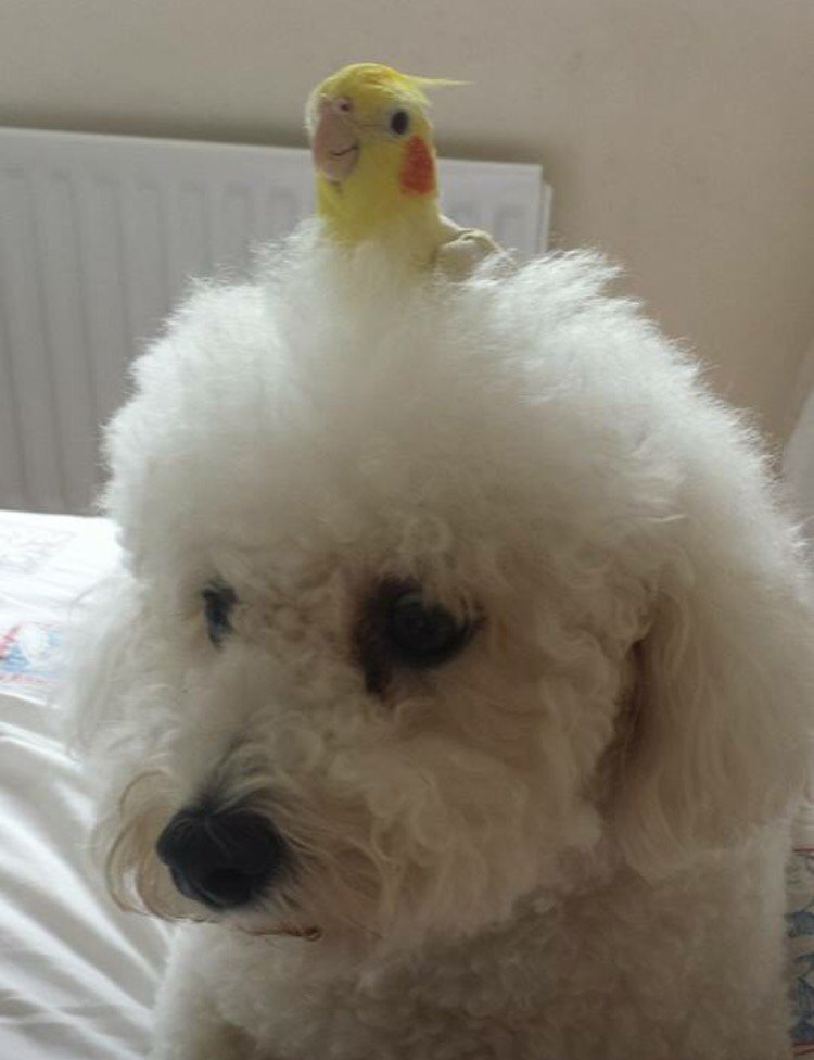 Things On Dogs Heads Teddy