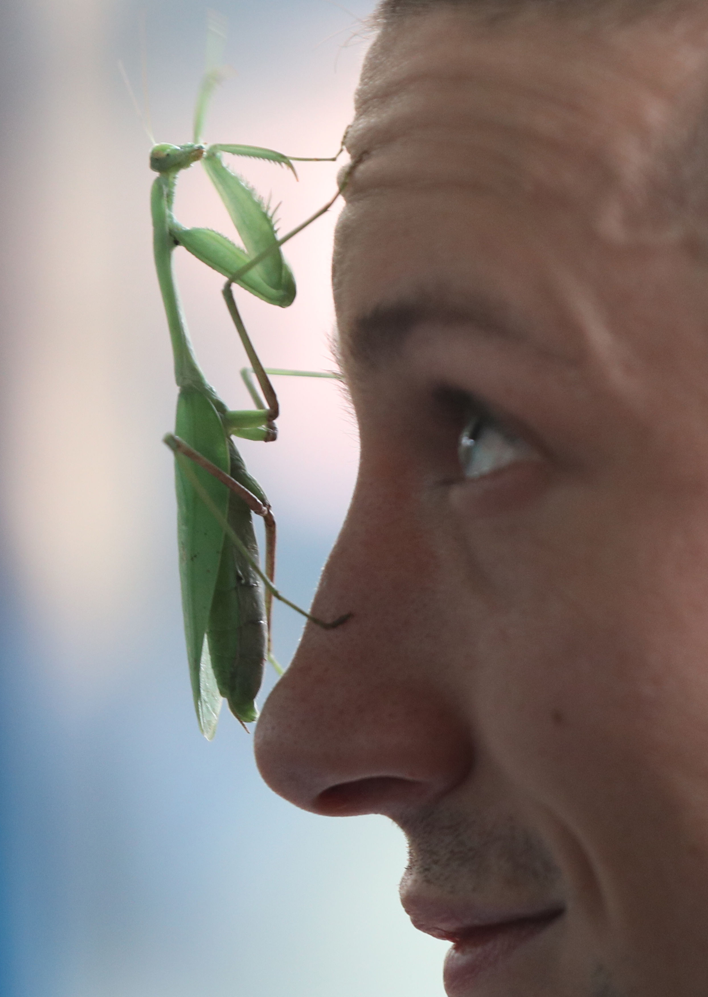London Zoo animal count mantis