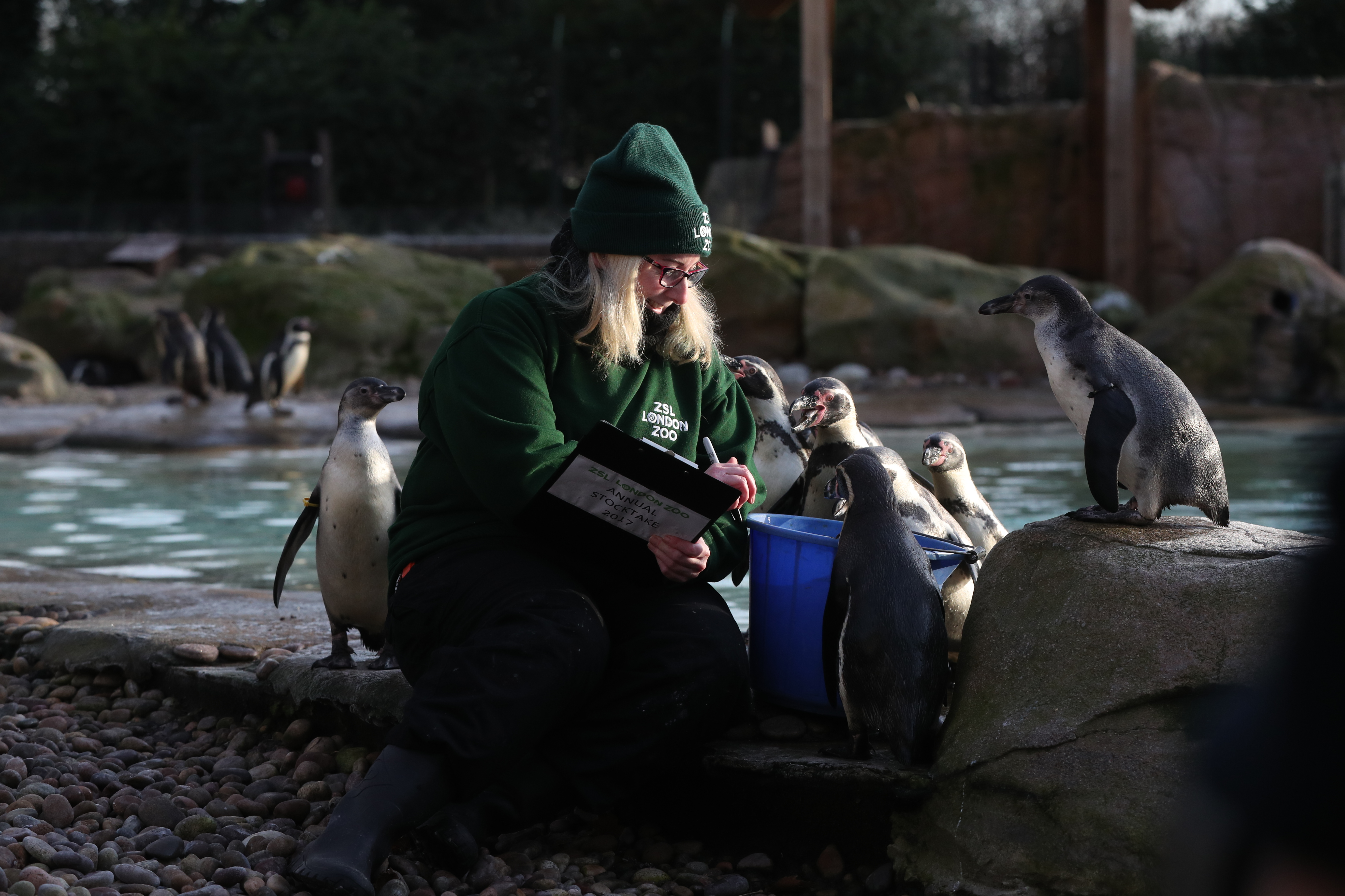 London Zoo animal count penguin