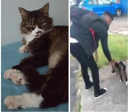 Epsom cat kicking