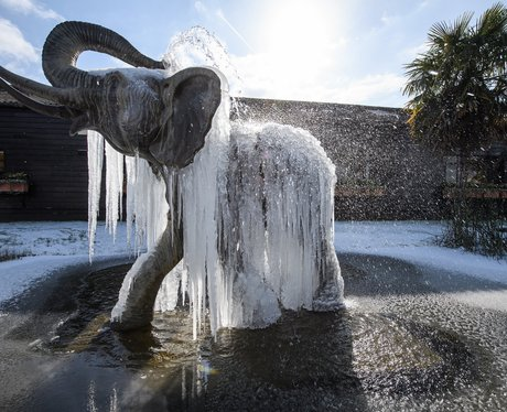 Icicles hang from the frozen elephant fountain in